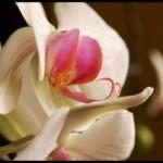 L'impresa impossibile di coltivare un'orchidea