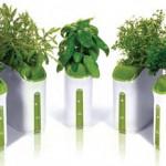 Vasi tecnologici per erbe aromatiche