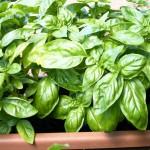 Come creare un balcone verde e profumato