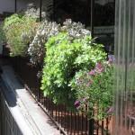 Come curare le piante quando si è in vacanza