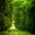 I luoghi comuni dell'ambientalismo