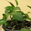 Come curare le piante d'appartamento in Inverno
