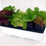 Orto sul balcone: i consigli per un orto fai da te