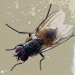 Perché le mosche sono così attratte dai lampadari?