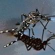 Stop alle punture di zanzara
