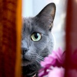 Con il tiragraffi per gatti fai da te il divano è salvo