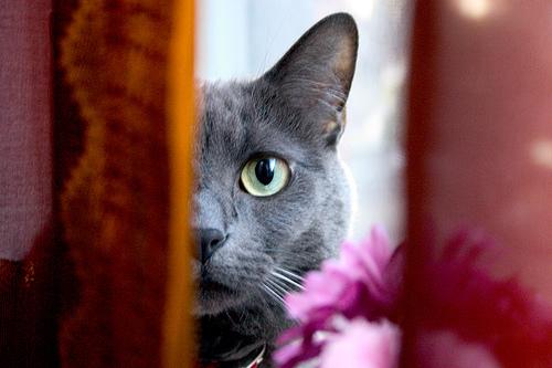Con il tiragraffi per gatti fai da te il divano salvo for Arredamento per gatti
