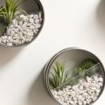 Il giardino magnetico: piante grasse per ornare l'ufficio