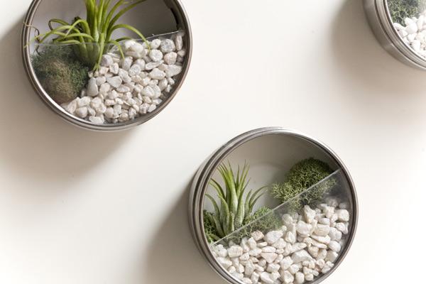 Piante Ufficio Ikea : Franco alfei: il giardino magnetico: piante grasse per ornare lufficio