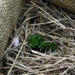 Orto sul balcone: la coltivazione nel sacco