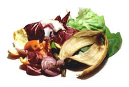 I rifiuti organici non sono altro che gli avanzi di pesce, carne, uova, gusci, caffè...
